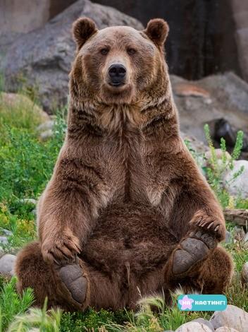 Brown_Bears_Stones_Sitting_Grass_541101_2048x2732.jpg